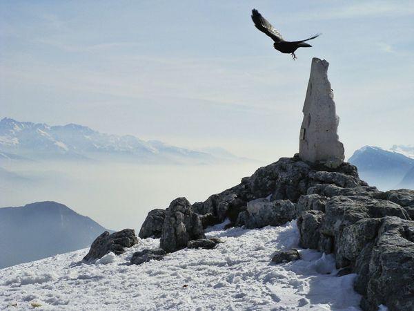 Melancholic Landscapes Oiseaux Paysage Brume