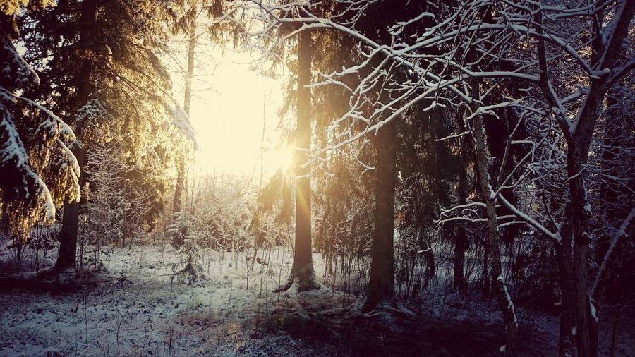 Vinterdag i desember ❄