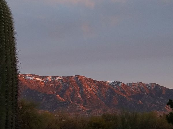 Miles Away Nature Sky No People Tree Landscape Outdoors Day Beauty In Nature Tucson Arizona  Mountains Catalina Mountains  Snow Winter Sky