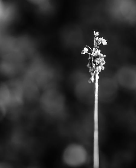 One remaining stalk of flowers drying in the sun. JGLowe Garden Garden Photography Landscape_Collection Landscape_photography Plantlife Flowers Plants 🌱 Landscape Garden_world Fine Art Photography Plants And Flowers Plants Garden Architecture Plant Minimmalist