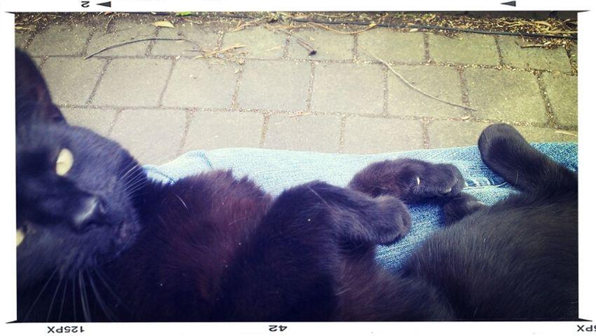 #Kitteh cuddles