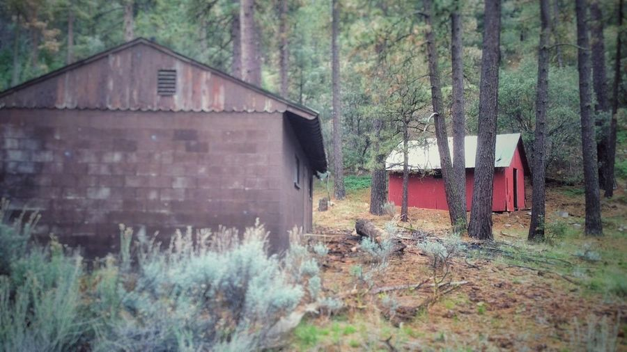 Cabin Rustic