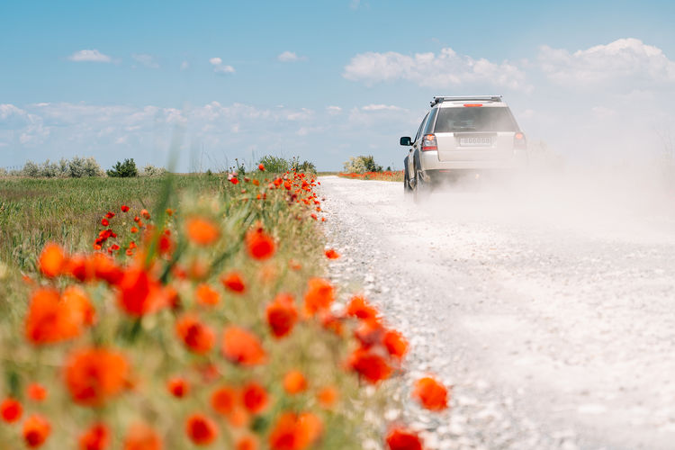 Scenic view of red flower on road amidst field against sky