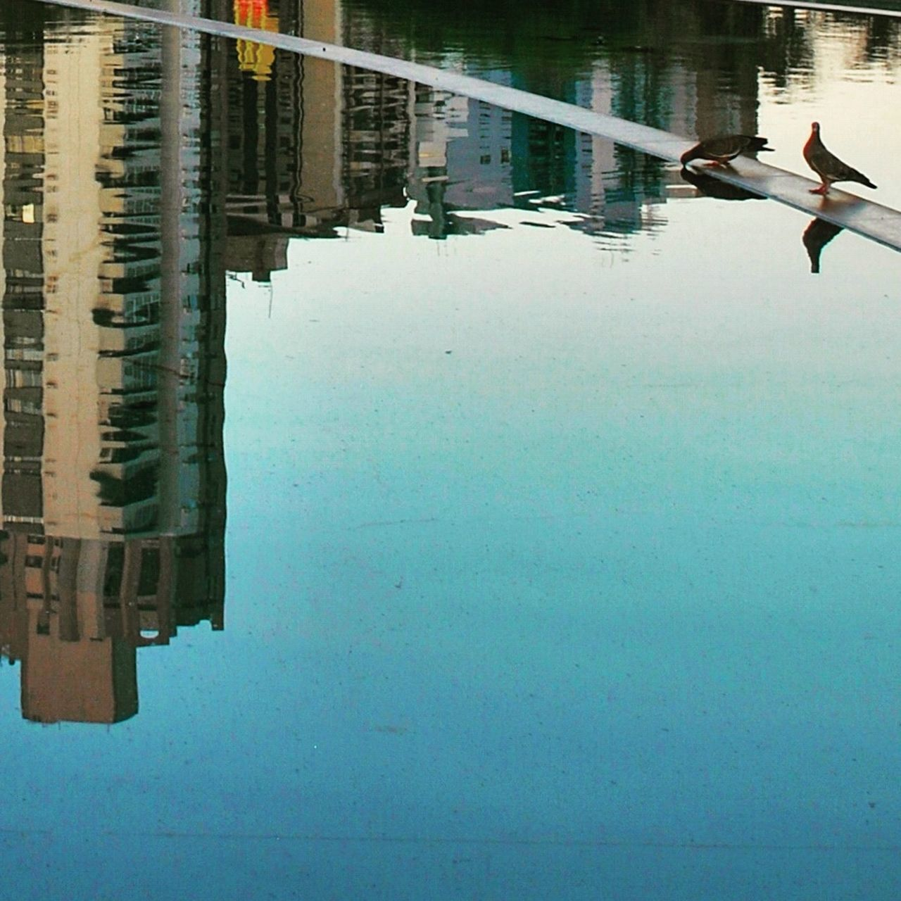 reflection, water, day, outdoors, architecture, animal themes, built structure, animals in the wild, waterfront, nature, building exterior, no people, bird, sky, beauty in nature, city