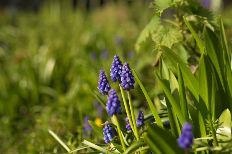 Spring time. EyeEm Nature Lover EyeEm Gallery Green Growth Nature Plant Beauty In Nature Bluebells Flower Full Frame Nature_collection Seasonal Spring Up Close