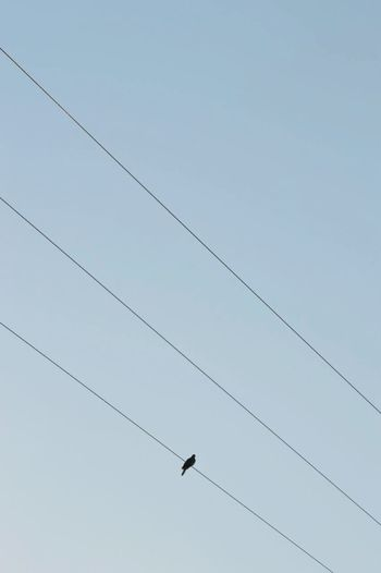Low Angle View Bird Animal Themes Animals In The Wild Cable Wildlife Clear Sky Connection Flying Perching Power Line  Power Cable Day Zoology Flight Tranquility Nature Scenics Tranquil Scene High Section