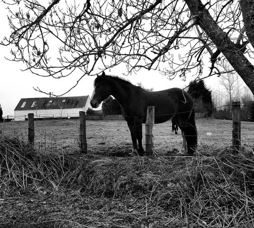 Wild world One Animal Animal Themes Horse Outdoors Blackandwhite World Black Color Nature Blackandwhite Retro Styled Camera - Photographic Equipment Photography Black & White Blackandwhiteworld Blackandwhitephoto Abstract Photography Film Industry White Background Photography Themes