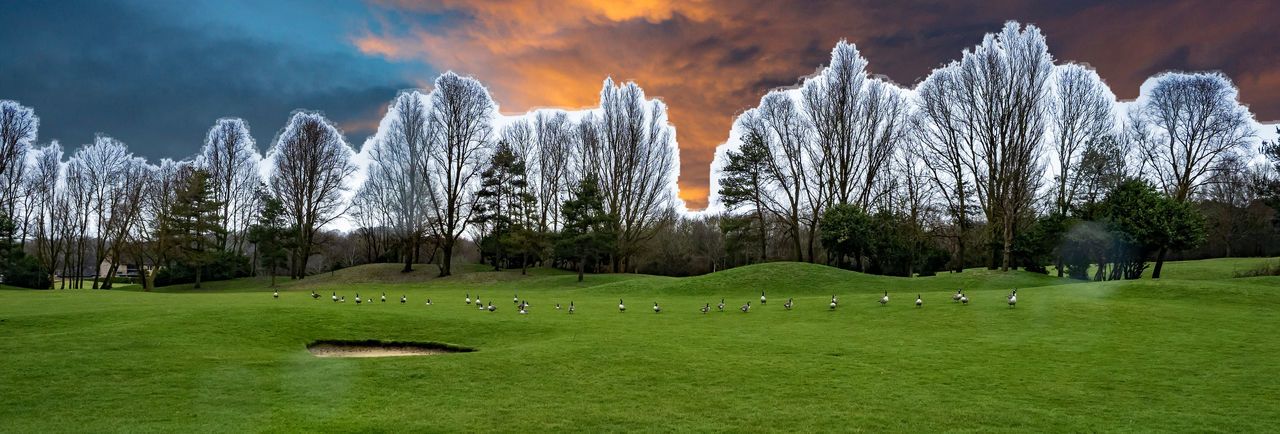 View of trees on field against sky
