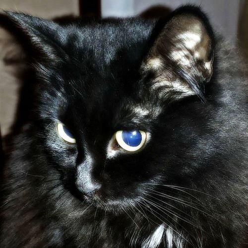Jessy_Most Most_music моя кошка захватывает instagram черноебратство котэуженете котомафия