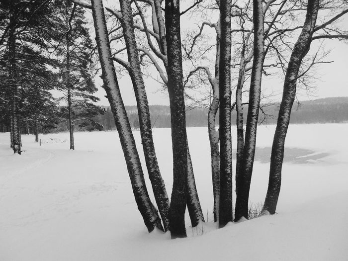 Bare Tree Black And White Blackandwhite Branch Cold Cold Temperature Landscapes With WhiteWall Forest Frozen Lake Monochrome Monocrome Studies Of Whiteness Nature Outdoors Season  Snow Showcase: January Tree Tree Trunk Tree_collection  Trees Weather Winter It's Cold Outside