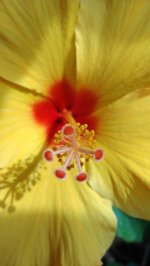 Home Home Sweet Home Mygarden My Favorite Photo Tadaa Community NoEditNoFilter ,2016 Taking Photos Enjoying Life Outdoors Showcase May From My Point Of View Macro Flower Yellow EyeEm Best Shots