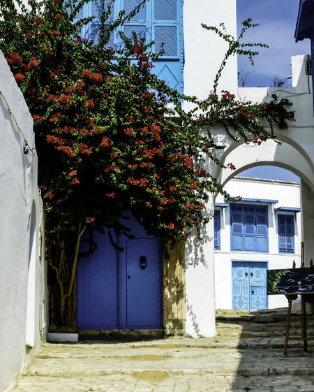 The blue doors of Sidi Bou Said Architecture Blue Building Exterior Built Structure Day Doorsworldwide Façade Flower Growth House Nature No People Outdoors Plant Residential Building Residential Structure Sidi Bou Said Original Experiences Colour Of Life