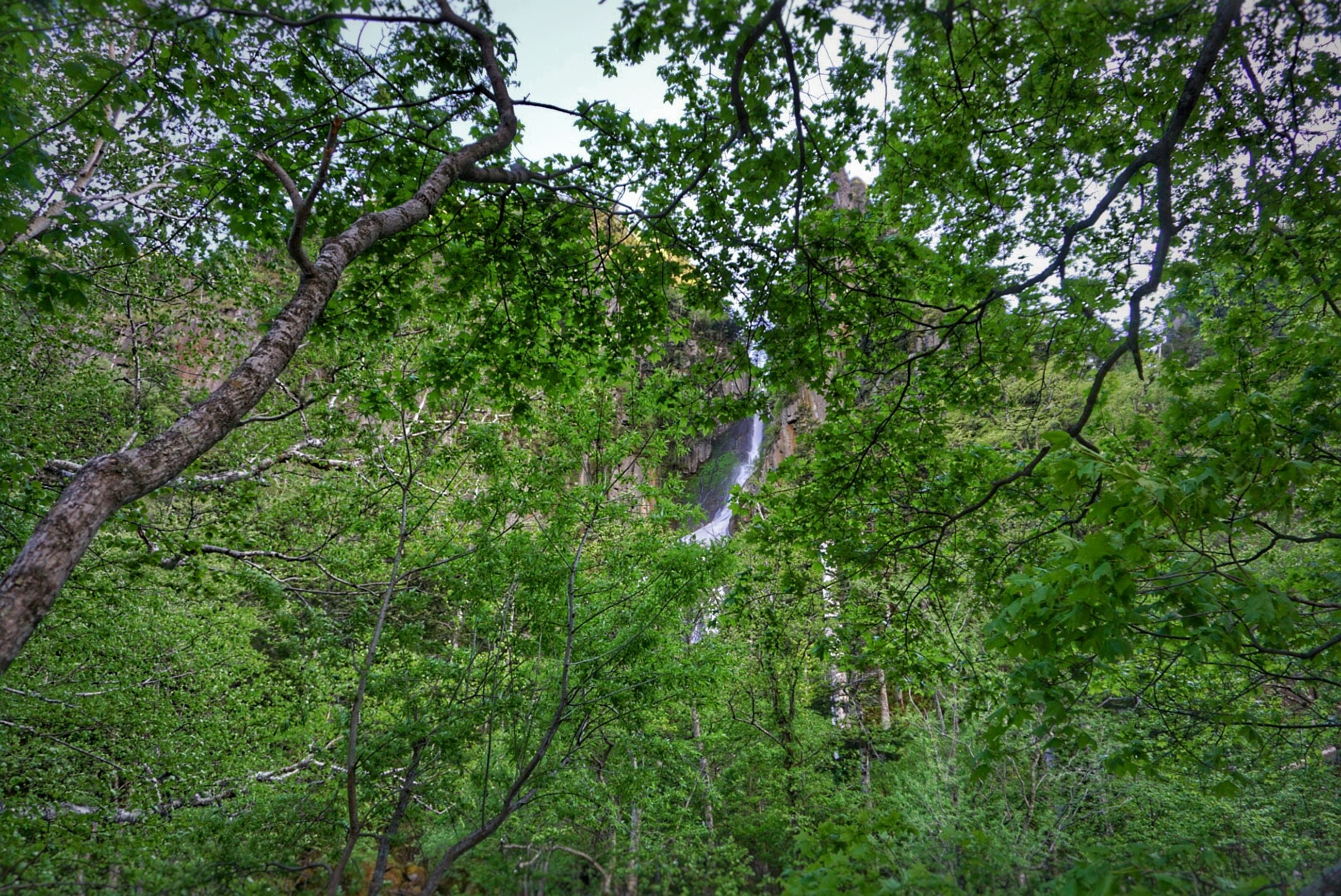 tree, growth, green color, beauty in nature, tranquility, nature, forest, scenics, tranquil scene, lush foliage, water, plant, grass, branch, idyllic, non-urban scene, day, landscape, green, waterfall