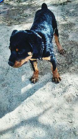 Babydoggy I Love Him <3 GoodMorning⛅