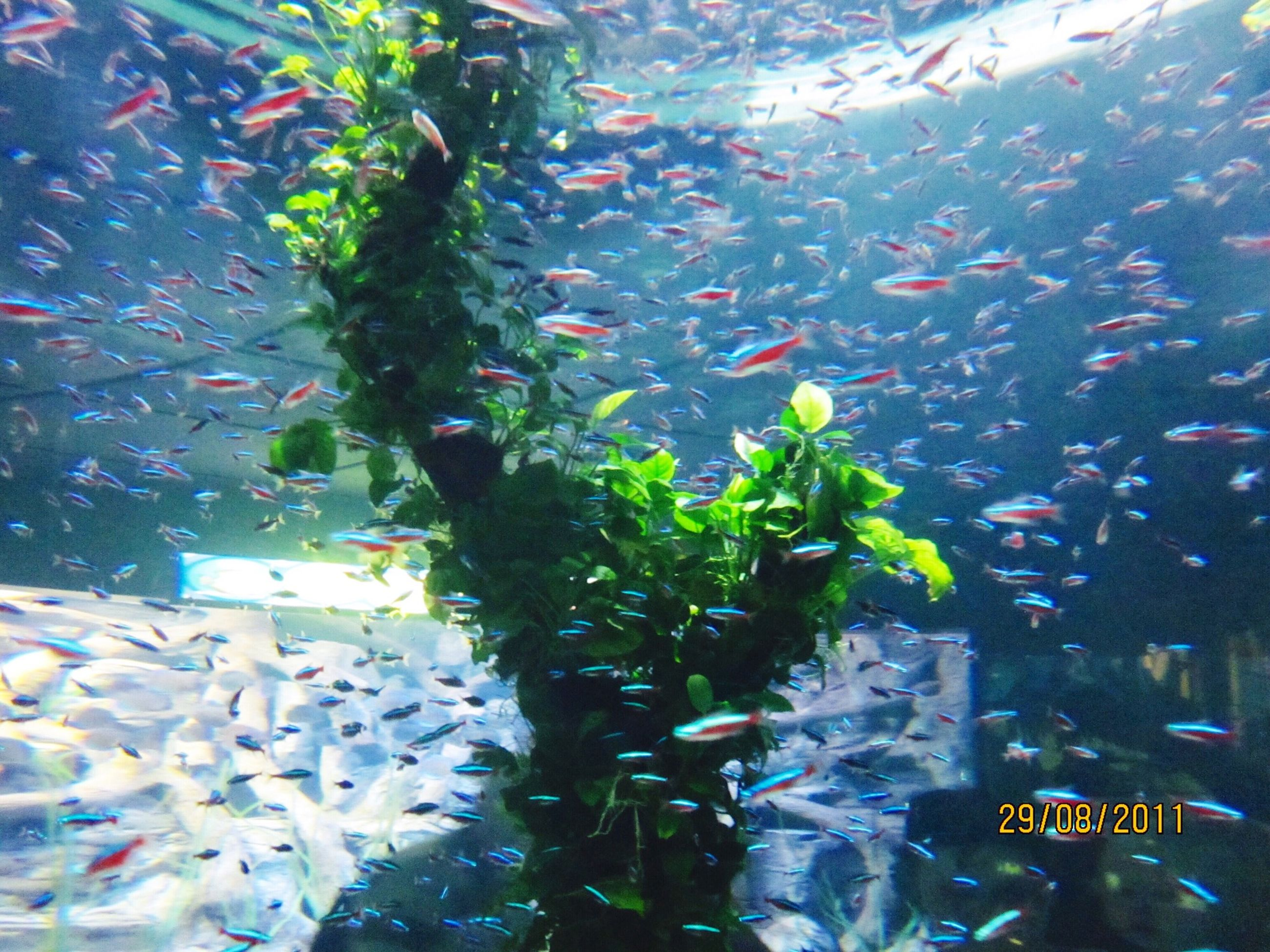 water, nature, high angle view, beauty in nature, growth, animal themes, plant, underwater, fish, leaf, animals in the wild, day, transparent, no people, outdoors, green color, wildlife, swimming, sunlight