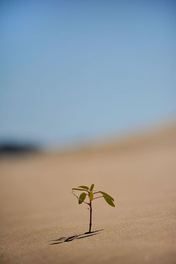Alone Small Tree One Desert Nature Beautiful Life Travel