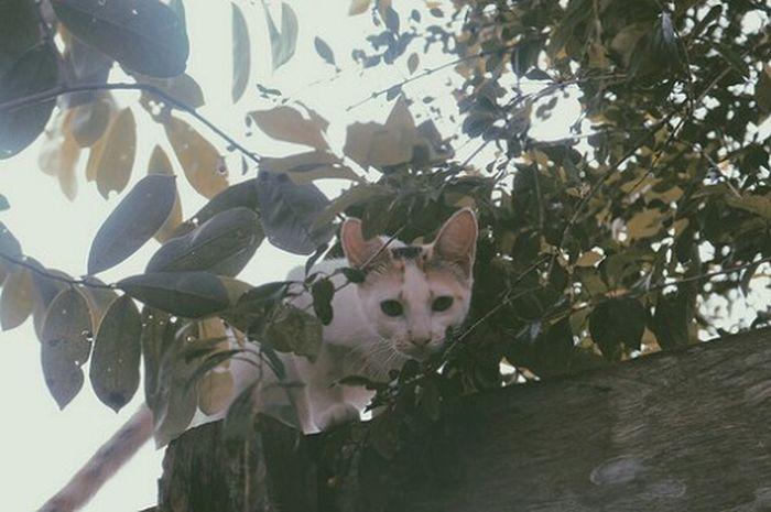 Cat Cat♡ Catlovers Gato Gata ♡ Gata