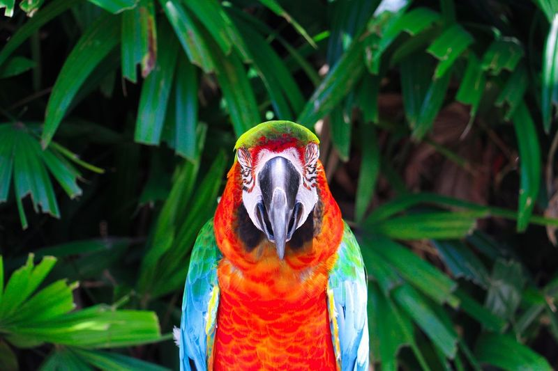 🐔🐥🦆🐧🐦🦅🌈life beautiful Parrot Bird Animals In The Wild One Animal Green Color Nature Hk Photography Animal Animal Themes