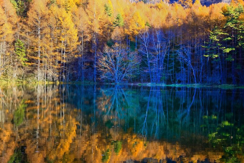 Deep forest pond in Autumn EyeEm Water Shots Reflection Water Reflections Water_collection Pond Forest Autumn Fall Light And Shadow Autumn Colors Tranquil Scene EyeEm Best Shots - Landscape Landscape EyeEm Best Shots - Nature Scene Photography Light And Shadows EyeEm Nature Lover Tranquility Beauty In Nature Landscapes Dedicate To @intreccio ISOPIX