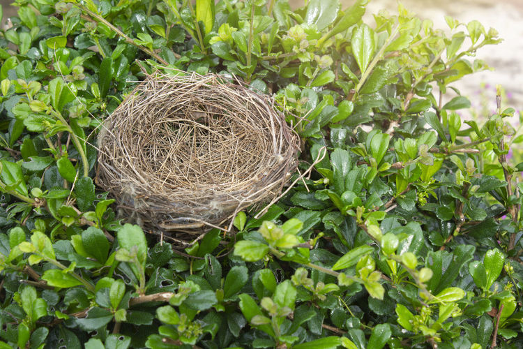 High angle view of nest in field