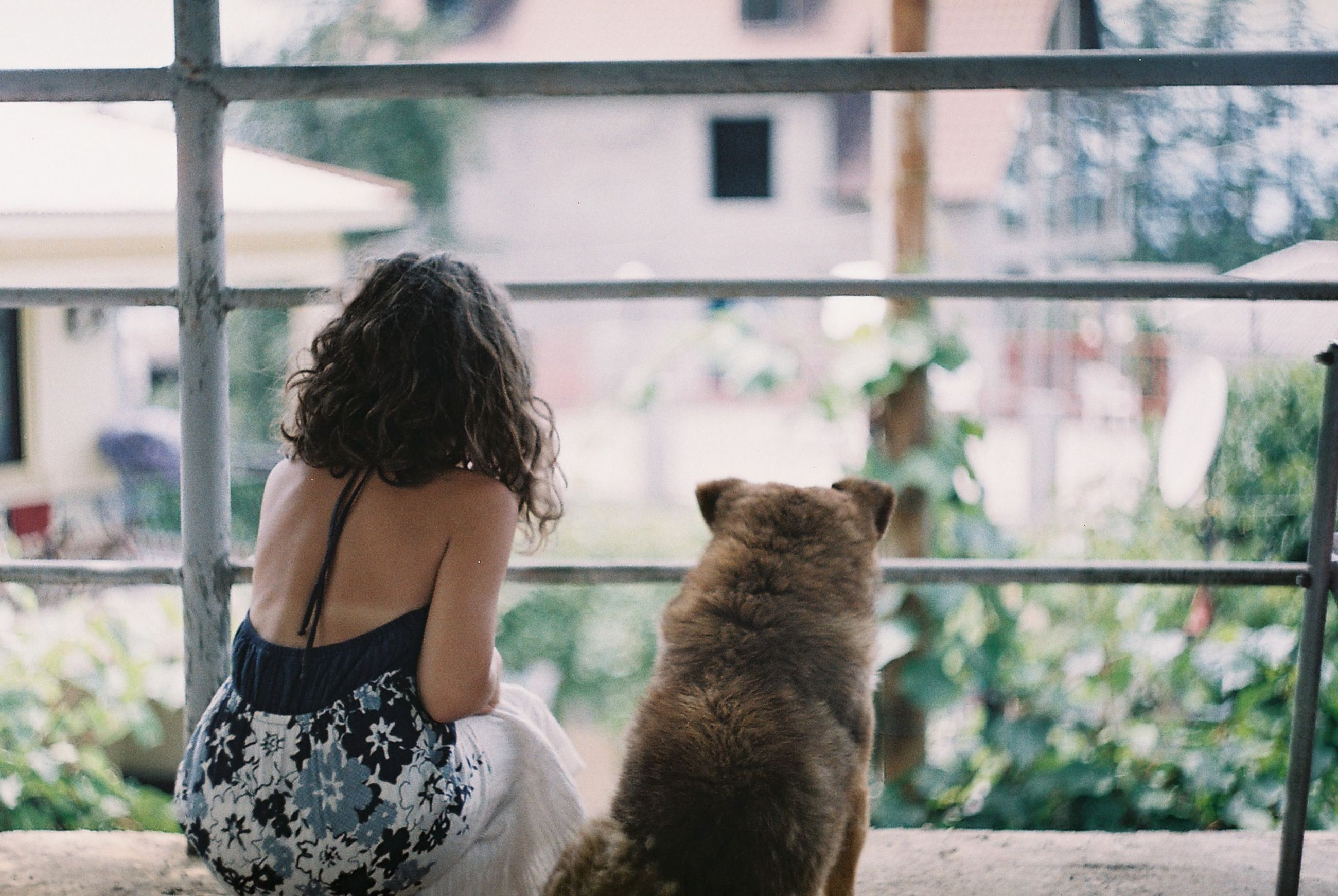 mammal, rear view, one person, domestic, pets, domestic animals, one animal, vertebrate, women, real people, leisure activity, lifestyles, window, day, built structure, cat, architecture, hair, outdoors, hairstyle