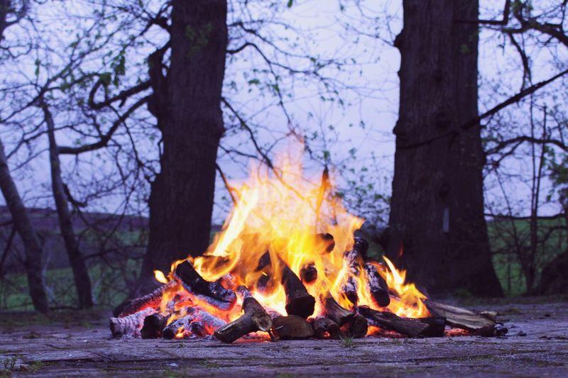 Bonfire on tree