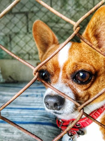 Pets Dog Domestic Animals Animal Themes One Animal Day Mammal Outdoors No People Focus On Foreground Looking At Camera Close-up Portrait Nature Steel Cage Rusty Cage