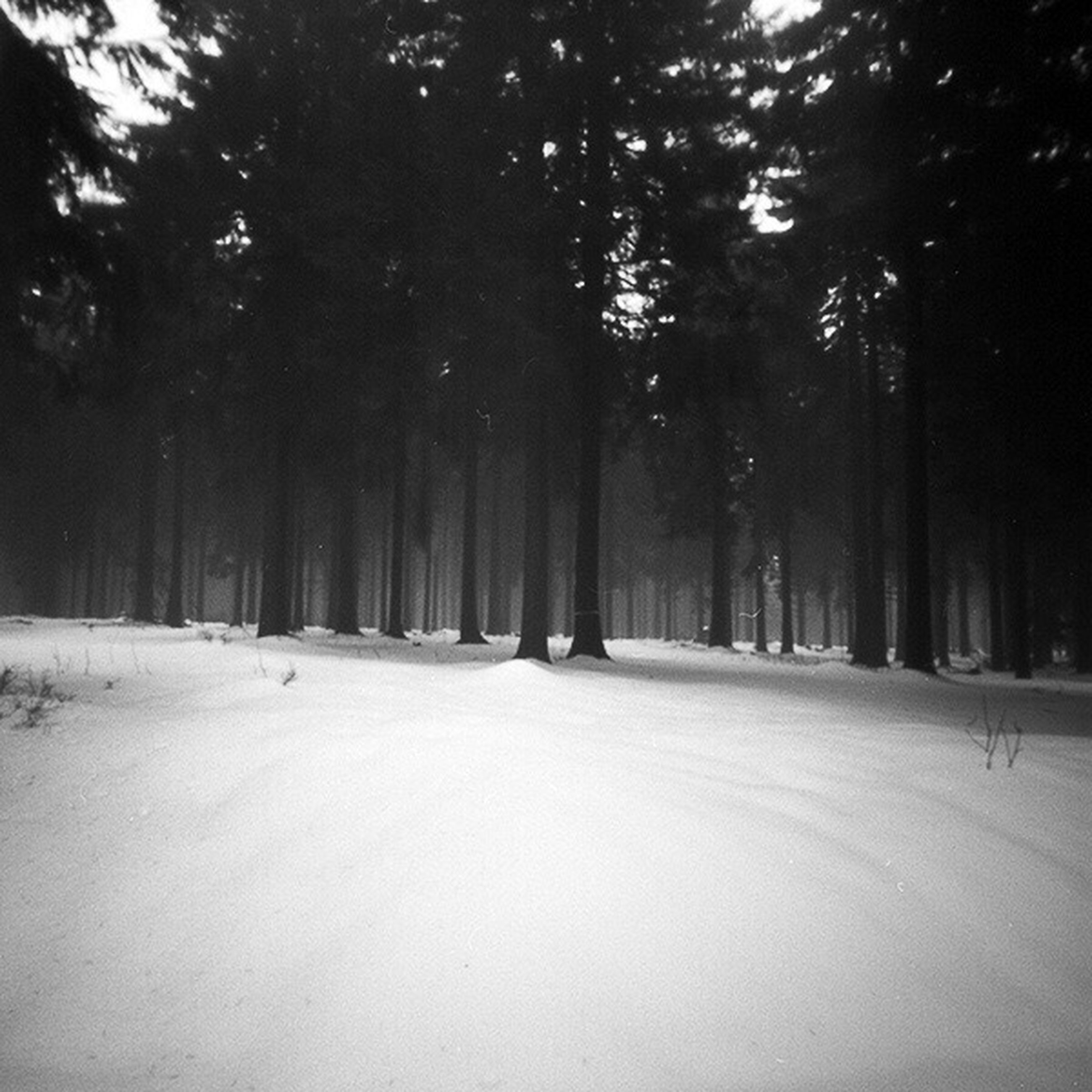 tree, the way forward, road, diminishing perspective, vanishing point, transportation, tranquility, nature, tranquil scene, snow, treelined, forest, winter, empty road, street, beauty in nature, landscape, growth, day, scenics