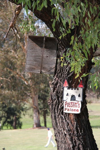 Australia Eucalyptus Tree Outdoors Palace Possum Rustic Home Tree Tree House