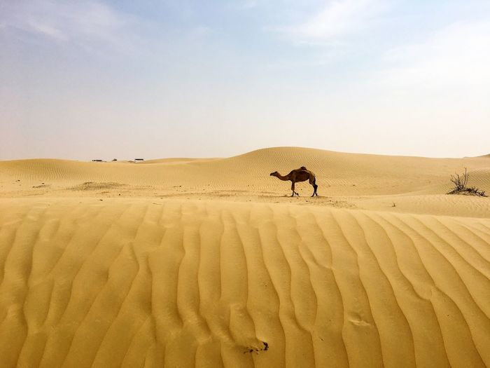 Man on sand dune in desert against clear sky