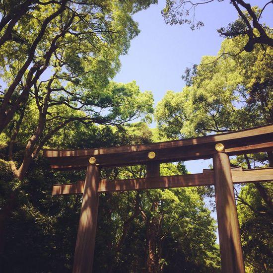 Temple Tokyo Nature EyeEm Nature Lover