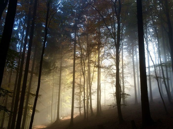 Autumn Taunus Morning Light Morning Tree Forest Plant Land Tranquility Beauty In Nature Growth Nature Scenics - Nature WoodLand Nature Sunlight Outdoors Tree WoodLand Beauty In Nature Nature Sunlight