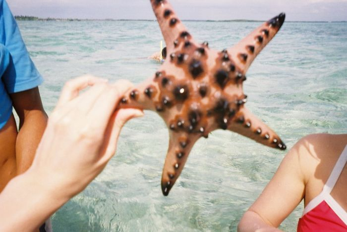 Cebu,Philippine Day Island Hopping Leisure Activity Nature's Diversities Outdoors Sea Sea Life Starfish  Vacations Water Enjoy The New Normal