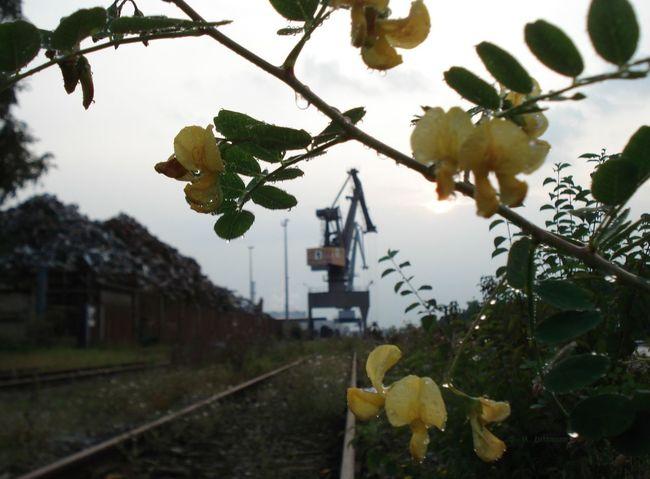 Hafenkran Hannover Nordhafen Beauty In Nature Crane - Construction Machinery Flower Green Color Nature No People Outdoors Schrottplatz Scrap Yard