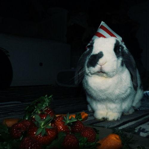 Happy birthday! Bunny  Rabbit Pet Birthday Happy Birthday Birthday Hat Fruit Strawberries Fruit Cake  Party Cute Red Table Homemade Strawberry