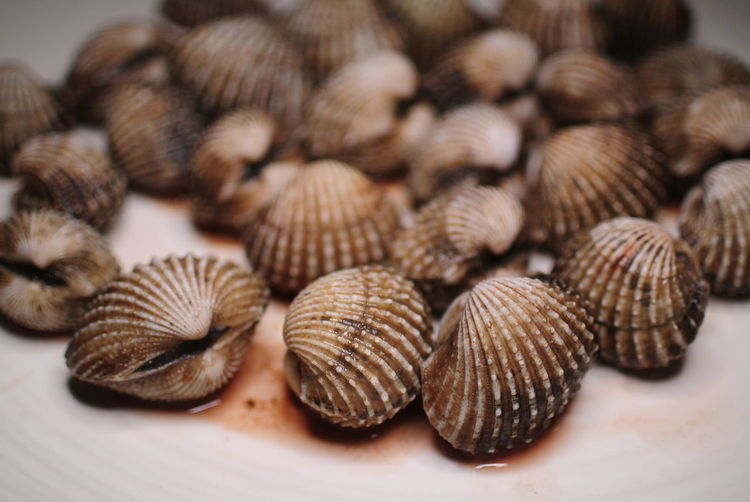 Close-up of cockles