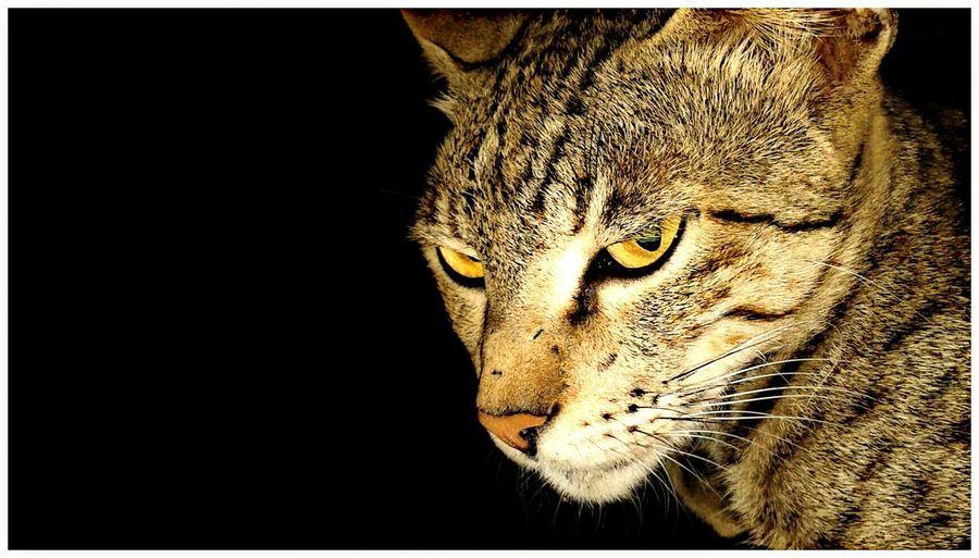 Cat Streetphotography Nightphotography Animal Wildlife Photography