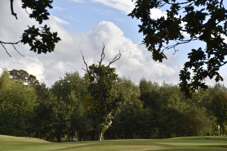 Cloud - Sky Day Earls Colne Essex Golf Golf Course Grass Green - Golf Course Green Color Growth Horizontal Nature No People Oak Trees Outdoors Sky Tree