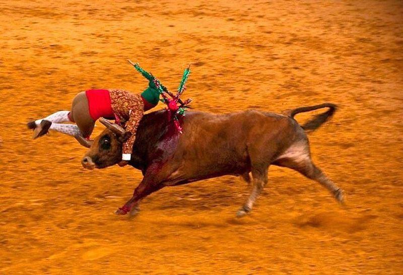 Bull bullfighting Animal Themes Bullfighting Evora, Portugal