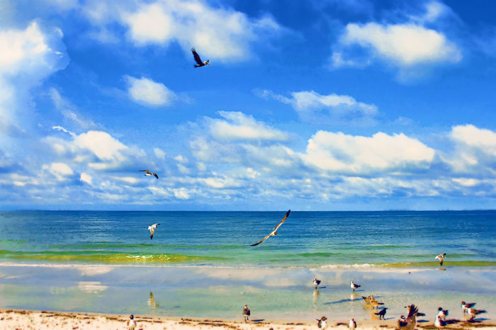 Beauty In Nature Bird Cloud Coastline Day Flying Horizon Over Water Madeira Beach Florida Nature No People Ocean Outdoors Saint Petersburg Florida Scenics Sea Seagulls Seascape Shore Sky Tourism Tranquil Scene Vacations Water