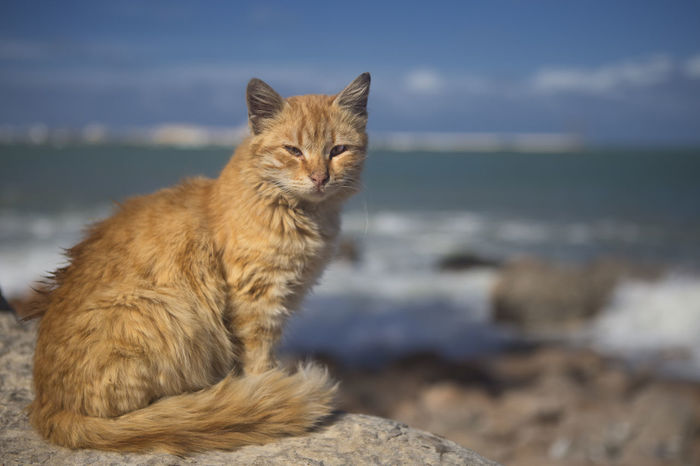 Animal Themes Cat Portrait Egyptian Cat Mammal Nature One Animal Red Cat Sea Scape Stray Cat Street Cat Of Alexandria,egypt