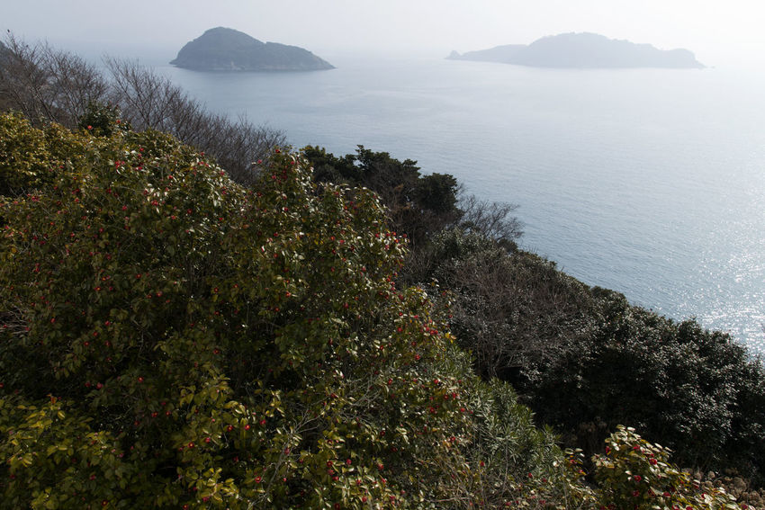 seaside of Jangsado Island in Tongyeong, Gyeongnam, South Korea. Taken with Nikon d850 Nikon D850 Seascape Photography South Korea Tranquility Beauty In Nature D850 Day Growth High Angle View Idyllic Island Jangsado Land Mountain Nature No People Non-urban Scene Outdoor Outdoor Photography Outdoors Peaceful Day Plant Scenics - Nature Sea Seascape Seaside Sky Tranquil Scene Tranquility Travel Destinations Tree Water