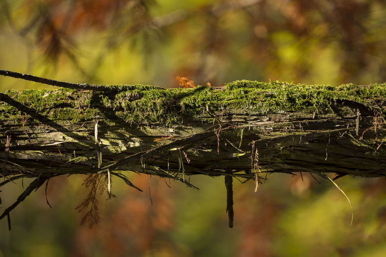 [Canon EF 300mm f/2.8 L IS II USM] Plant Tree Focus On Foreground Close-up No People Day Nature Green Color Selective Focus Growth Outdoors Beauty In Nature Tranquility Forest Moss Branch Land Leaf Plant Part Twig Autumn Autumn colors Autumn Forest Autumn Trees