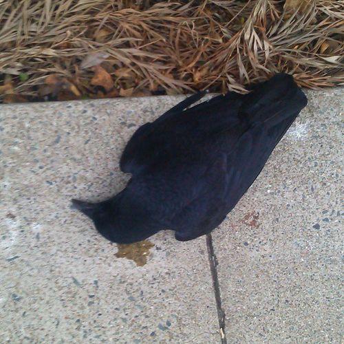 Rest in peace random bird I found next to kaiser