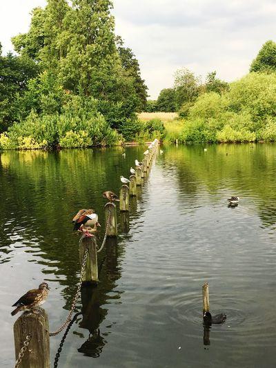 Lake Bird Perspectives Kensington