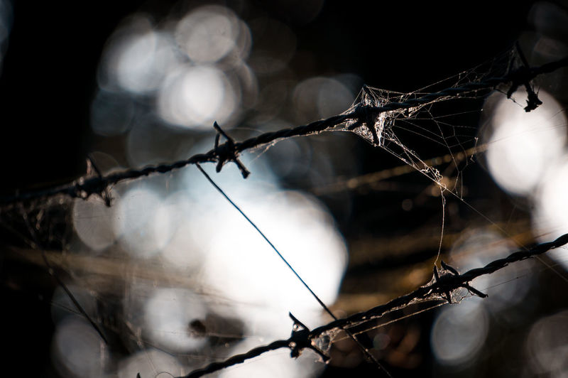 Close-Up Of Spider Web On Barbed Wire Fence