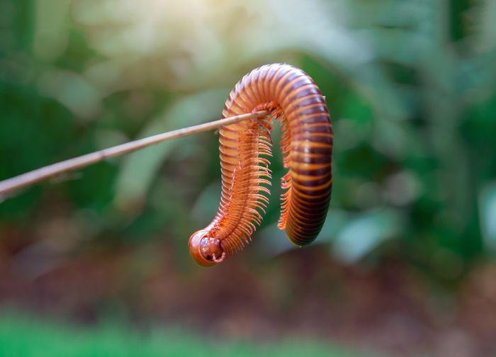 Close-up of millipede on leaf