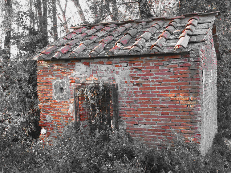 Haunted horror house. Old haunted house in the woods with evil spirits Abandoned Autumn Creepy Dark Demonic Direful Evil Fantasy Fear Frightening Ghost Grave Grim Halloween Haunted Home Horror House Mansion Mist Mystery October Spooky Terrible Woods