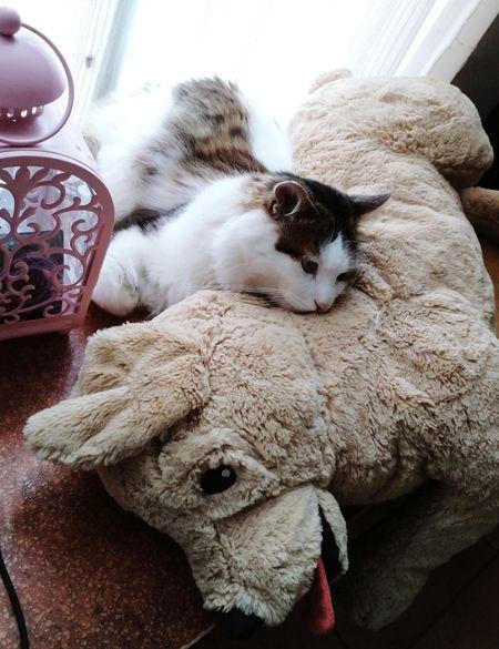 Pets Sleeping Close-up