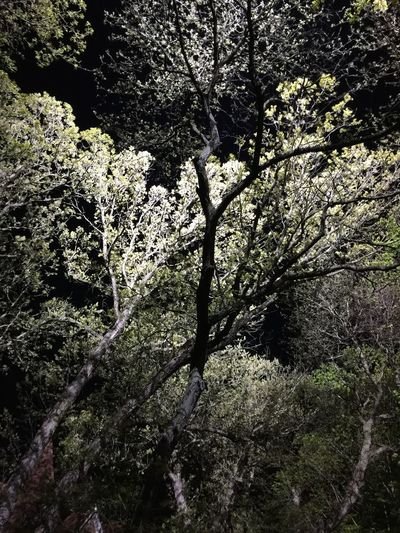 Lights on the trees Nightphotography Night Lighting Leaves Forest Forest Photography Plant Tree Nature Growth Beauty In Nature Day No People Full Frame Sunlight Tranquility Branch Backgrounds Low Angle View Outdoors Land Forest Sky Shadow Tree Trunk